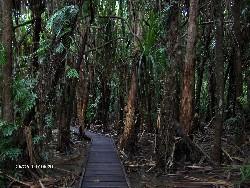 Reise 2007 - Cairns